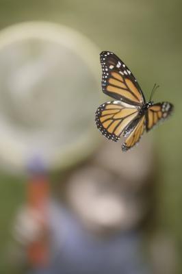 Floridas innfødte arter av insekter