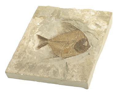 Hvordan lage en Mold & Cast av en Fossil