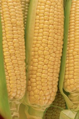 Hvordan bygge en modell Corn Crib