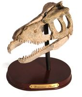 Hva er en Body Fossil?
