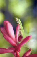 Metoder for å bli kvitt Lizards