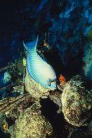 Organismer som lever på eller Under the Ocean Bottom