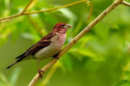 Hjemmelaget Finch Feeders