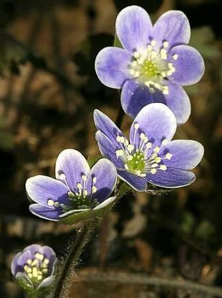 Den kjønns Deler av en blomst