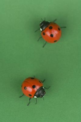 Ladybug Bursdag Games