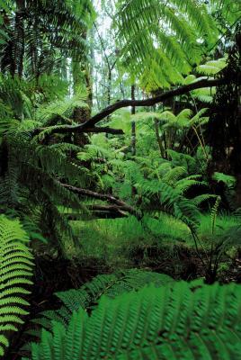 regnskoger i afrika