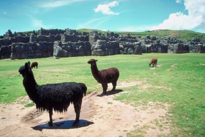 Innfødte dyr i Atacama-ørkenen