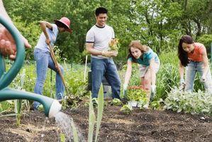 Sosiale aktiviteter for grupper