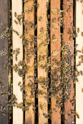 Hvordan lage en Bee Redet innsiden av hjemmet ditt