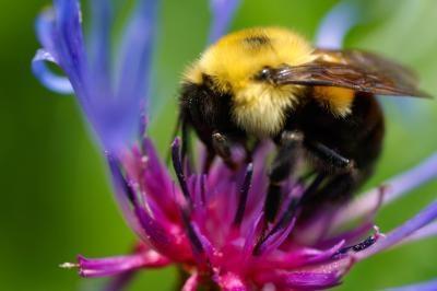 Hva Bees lage reir i trær?