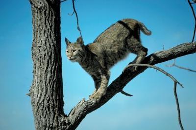 Predators av den sørlige Flying Squirrel