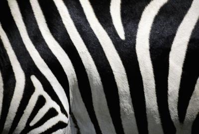 Ideer for en Zebra Print & Hot Pink Sweet Sixteen
