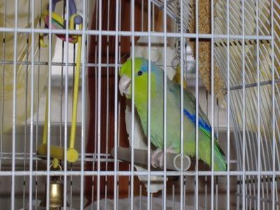 Hvordan å holde en Pet Bird Warm