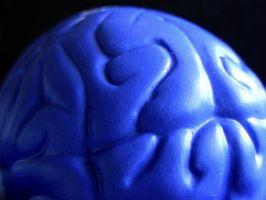 Cerebral ventrikkel Funksjoner
