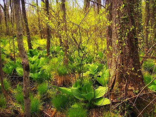Truede planter i barskog