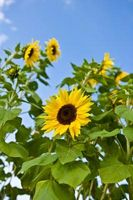 Sommer bryllup temaer med blomster