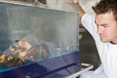 Hvordan Sug Carbon i et filter Aquarium