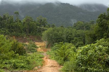 African Rainforest dyr som er truet