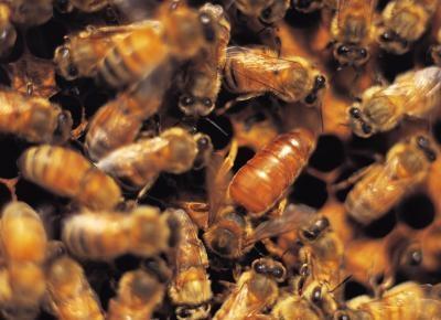 Hvordan bruke Bee Utstyr