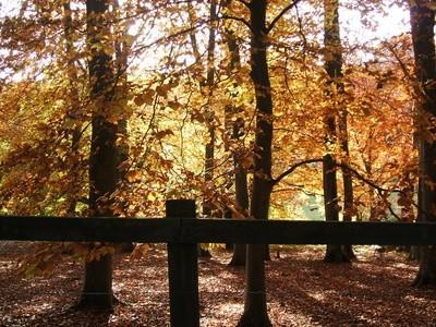 Hvordan Paint Forest Shadows