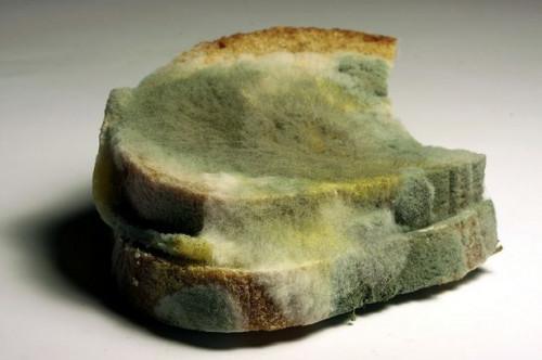 Hvordan blir det mugg på brød?