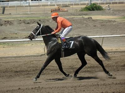 Hest Gaver til en Young Rider