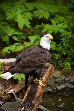 Bird Identification i Arkansas