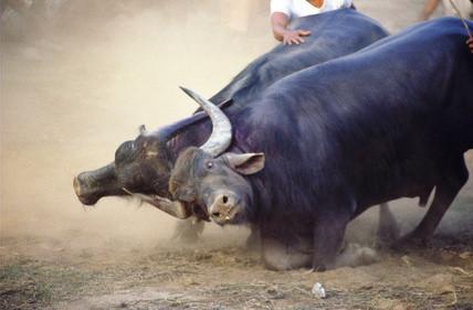 Hvordan Tegn en Bull