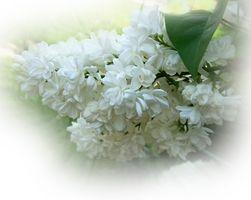 Svart-hvitt Wedding Bouquet Ideer