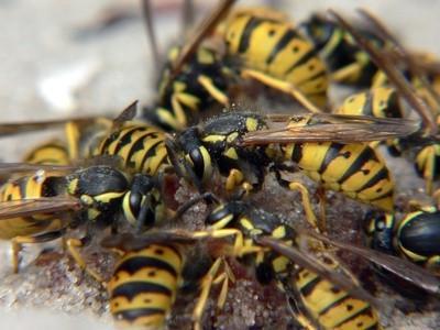 Hva Insekter hjelpe bønder?