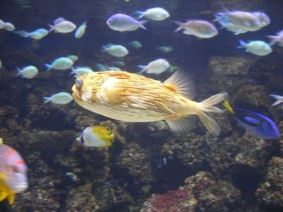 Hvordan koble opp Aquarium Air Pumper