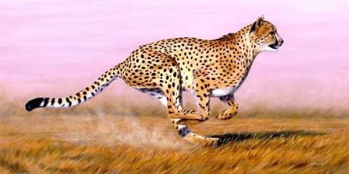 Hvor fort en Cheetah Run?