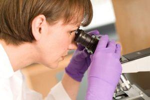 Typer mikroskoper og deres bruksområder for prøver