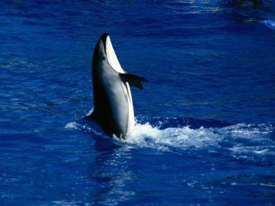 Hva er forskjellene mellom delfiner, niser, og Fish?