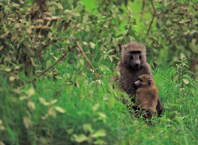 Typer av Primate Dyr
