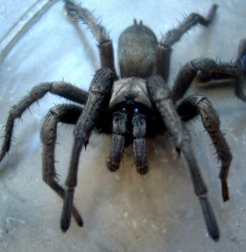 Hva Insekter Har Spiders spise?
