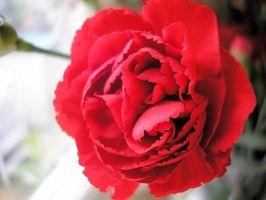Rimelige blomster for bryllup