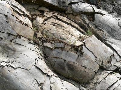 Fossiler som er funnet i Michigan