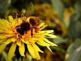 Hvilken type Symbiose ligger mellom Blomster og deres pollinatorer?