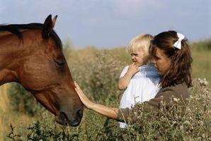 Baby gaver til hest elskere