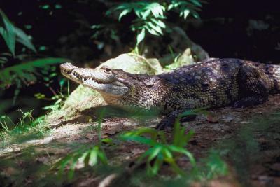 Dyr Funnet i Bukit Timah Nature Reserve