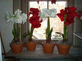 Bryllupsutstyr Dusj med silke blomster Ideas