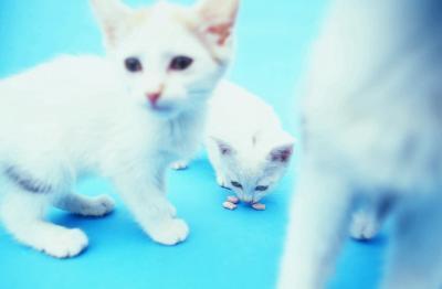 Tredje klasse Science Fair Projects på Cats