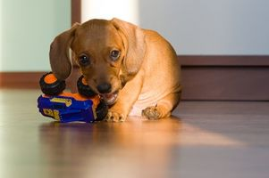 Hvordan lage Gavekurver for Dogs