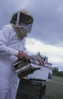 Alternativer til Røyke Bees