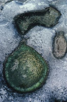 Hvorfor er Fossiler forskjellige farger?