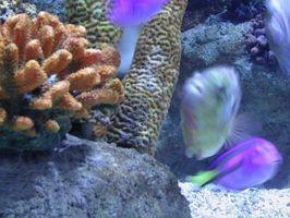 Aquatic planter og dyr i et lukket økosystem
