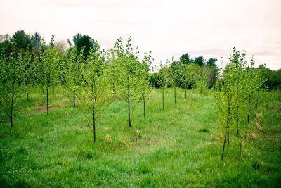 Hvordan Plant a Tree ære for (eller ting å gjøre i Honor av) Someone