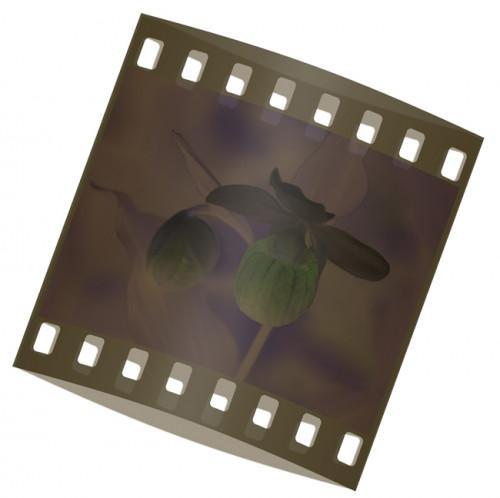 Slik konverterer negativer til digitale bilder