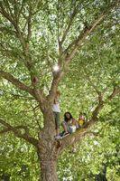 List opp måter Kids kan hjelpe redde jorden